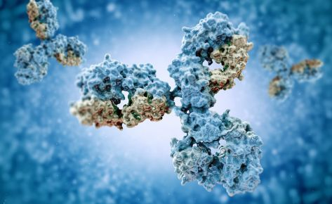 Ligand: Antibodies, proteins and peptides