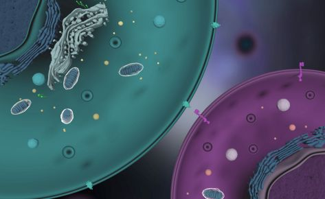 Ligand: Virus, bacteria and cells